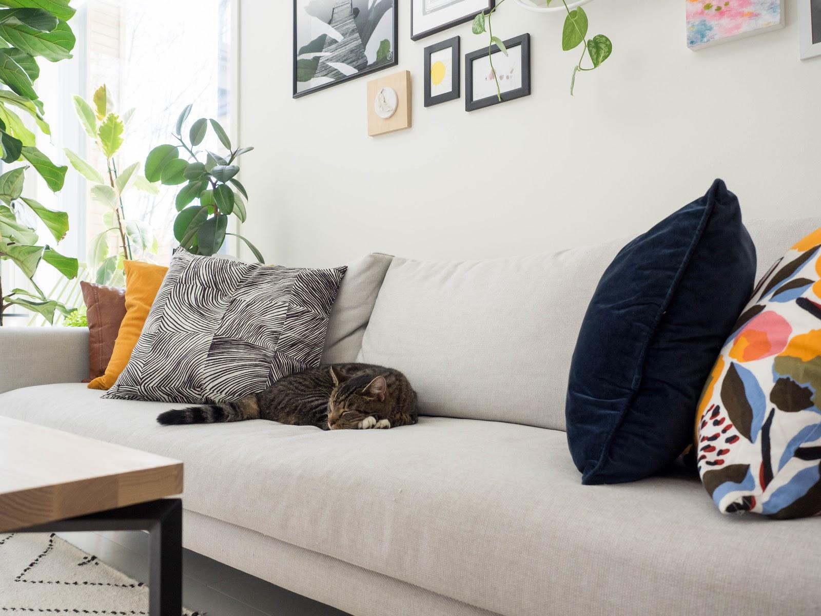 kissa sohvalla, olohuone, sisustus