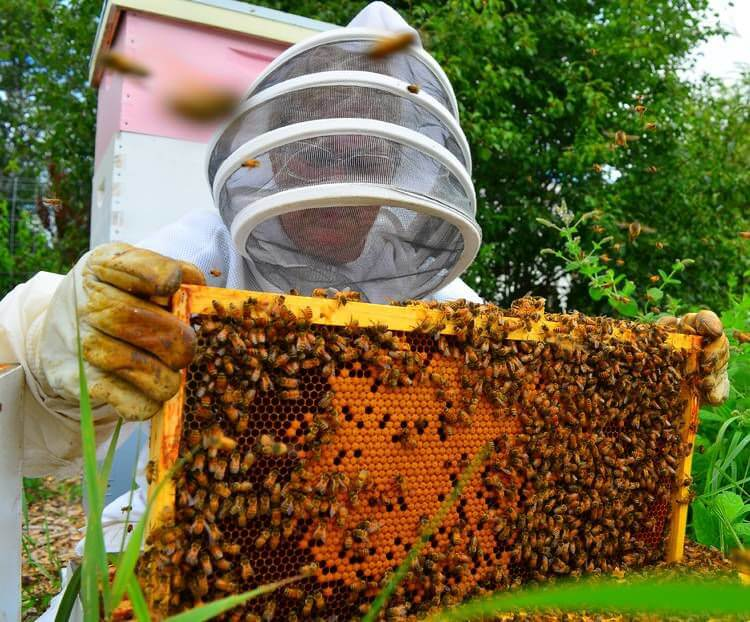 Beekeeping In The North Country: Fueling The Farm-To-Table Culture, Keeping The Bee Population Safe From Threats