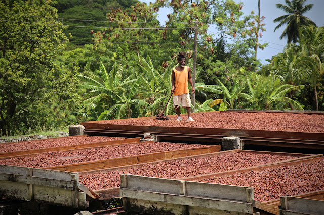 Diamond chocolate factory, Grenada, where cacao beans are drying in the sun