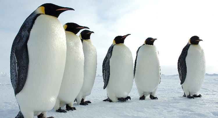 Where Do Adelie Penguins Live