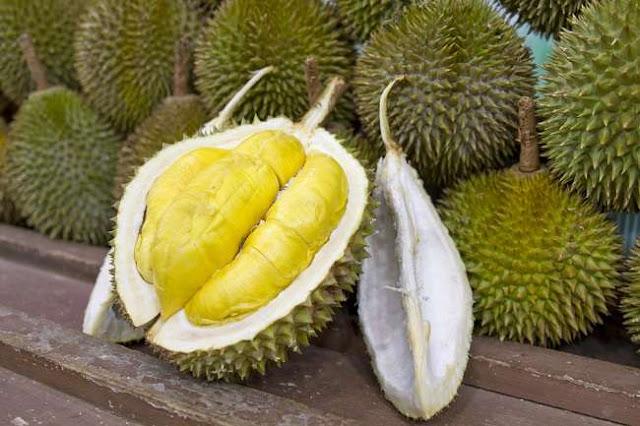 Manfaat Durian Bagi Kesehatan Tubuh Manusia