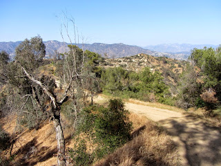 View north on Toyon Trail, Griffith Park