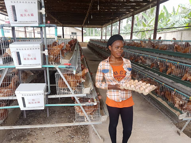 Luxury Farms Ltd, Aba