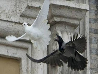 dove and crow