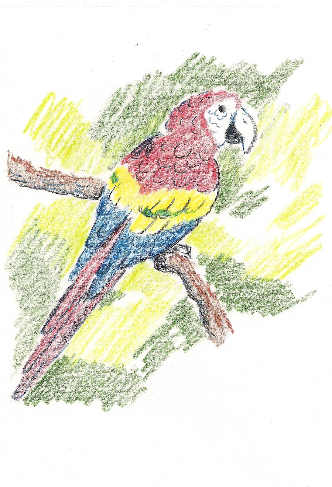 How To Draw Worksheets For The Young Artist How To Draw A Parrot Worksheet For Young Artist