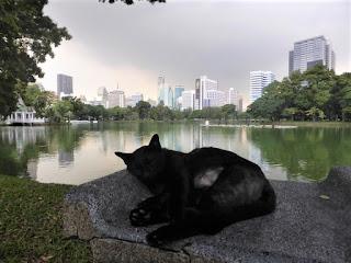 Gato en el Parque Lumpini