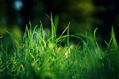 Neighbourhood plan, planning appeal granted despite five year land supply: image of grass