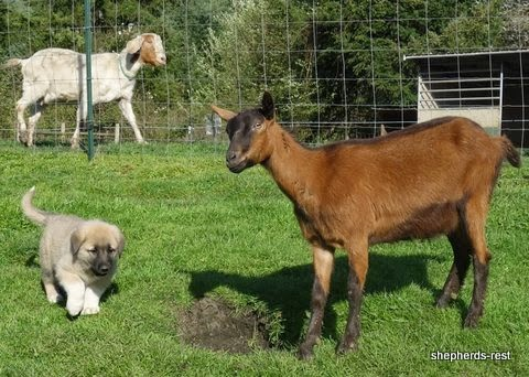 Training Lgd Dogs