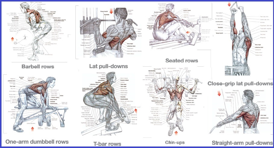 Back Exercises for Building a Strong Back - all