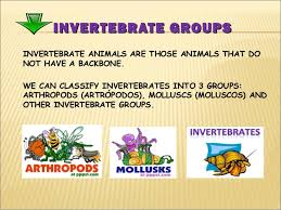 http://www.teachkidlearn.com/animal-classification.html