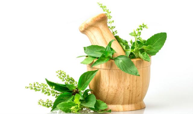 जानिये तुलसी के कुछ महत्वयपूर्ण फ़ायदे - Top Benefits of Tulsi (Holy Basil)