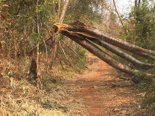 A fallen tree allows little room for our truck and passengers to slide through. Note the single trail on this so called Road, single because of only motorcycle traffic. No recent signs of 4 wheel traffic...