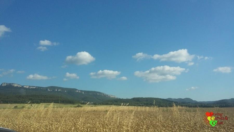 De-camino-a-Chateau-Les-Olivers-de-Salettes