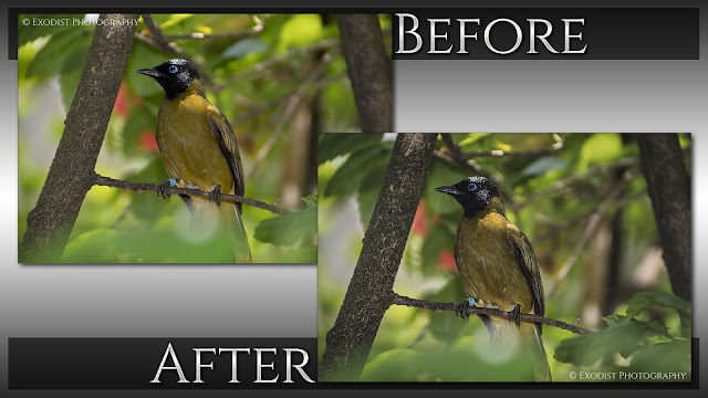 Classic Wildlife Magazine Photo Retouching - Before & After - © Exodist Photography, All Rights Reserved