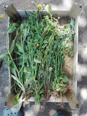 Cose da fare nell'orto biologico: togliere le erbacce