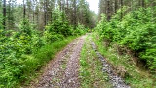 Saxoprint Sachsentrail 2016 Halftrail