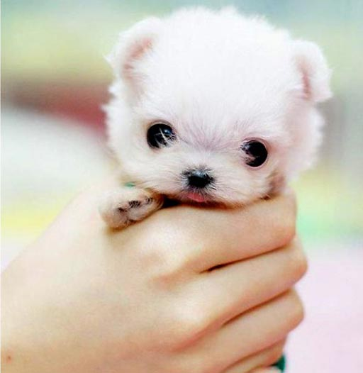 Dog Breeds That Have The CUTEST Puppies