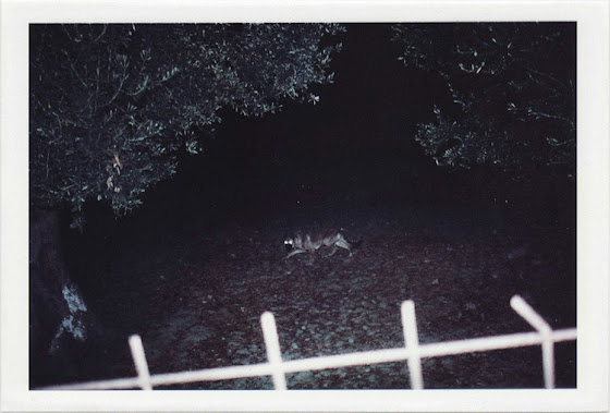 dirty photos - umbra - a night street photo of a dog behind fence