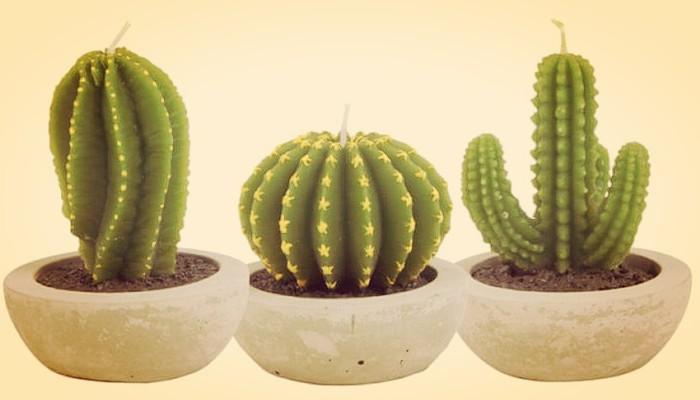 Que significan los cactus