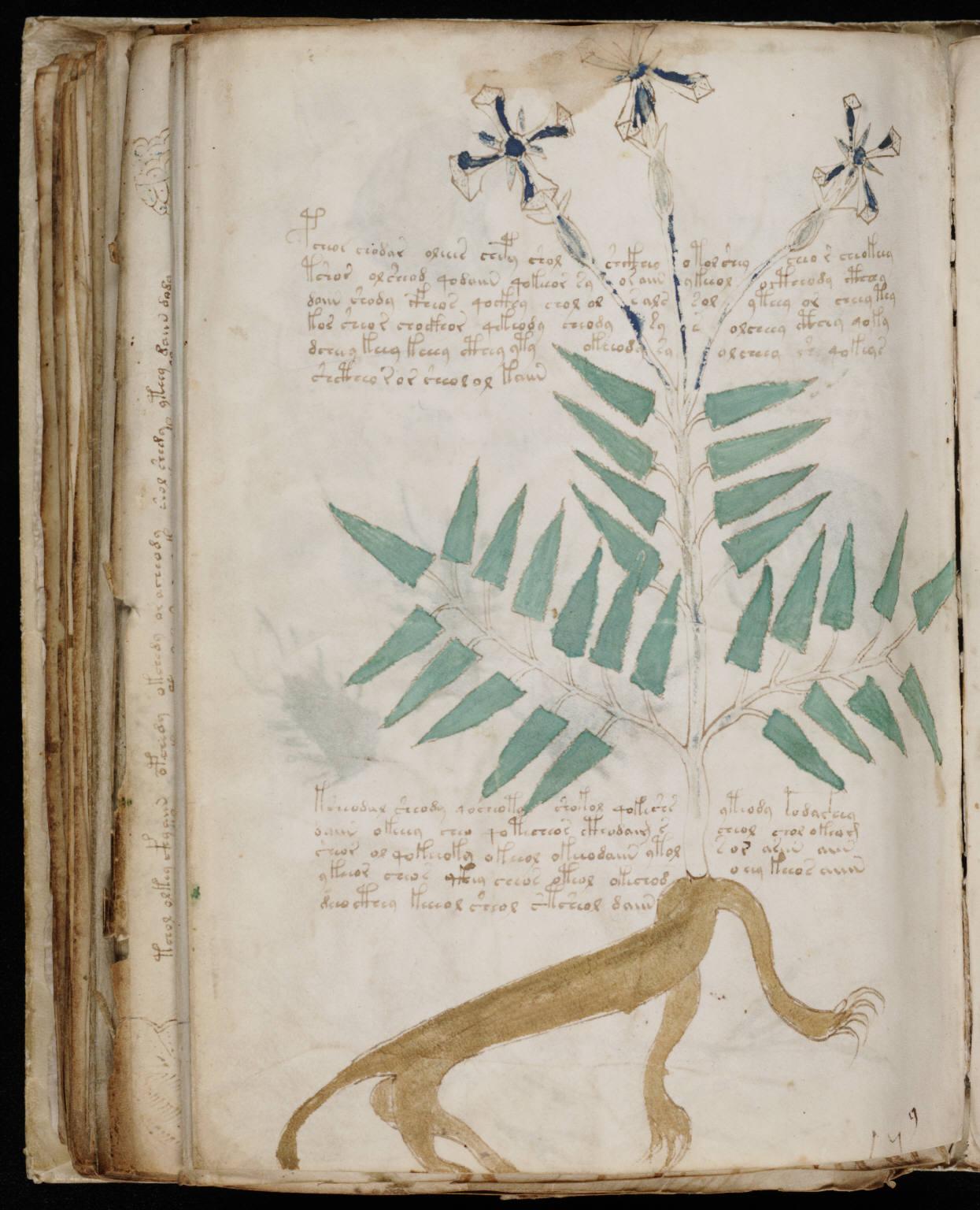 manuscrito164
