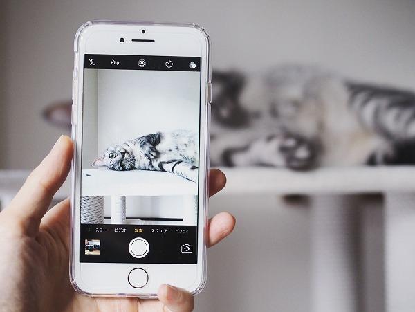 iphone7の画面越しに見るサバトラ猫