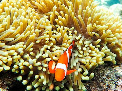 Snorkeling-Menjangan-Bali