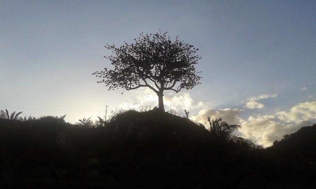 A tree at Sea Spring Resort Hotel