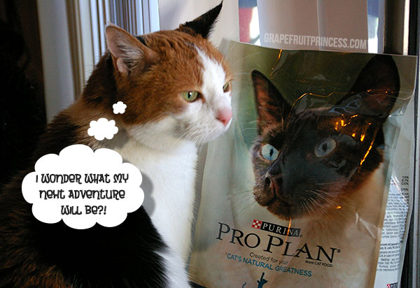 "Purina Pro Plan, Cat Food, National Take your cat on an adventure"" day, auswandern mit katze, relocation, pet, cat"