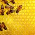 Encontro de apicultores da Bacia do Jacuípe será realizado em Nova Fátima