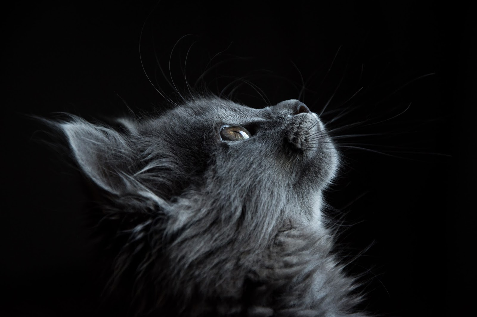The Domestic Cat | Animalix - Magazine