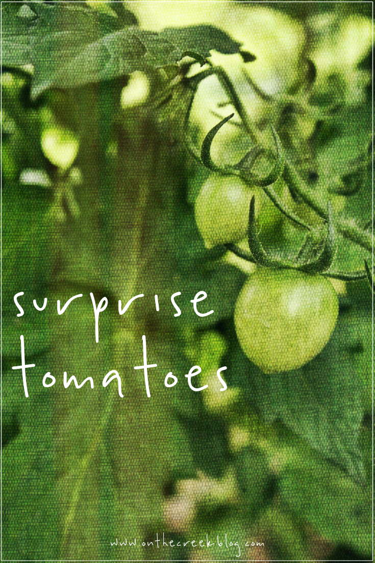 Surprise Tomatoes | On The Creek Blog