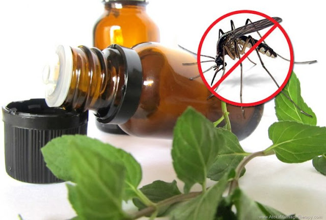 This Homemade Mosquito Spray will Protect your from the Zika Virus