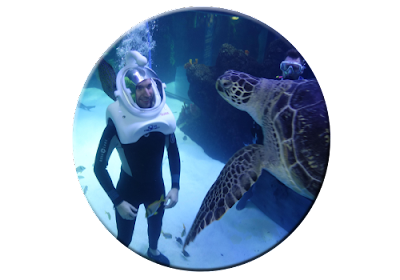 Sea TREK bubbles attract turtle