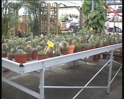 Fitosofia vivero de plantas ornamentales primera parte for Vegetacion ornamental