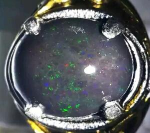 merawat black opal minyak ambon