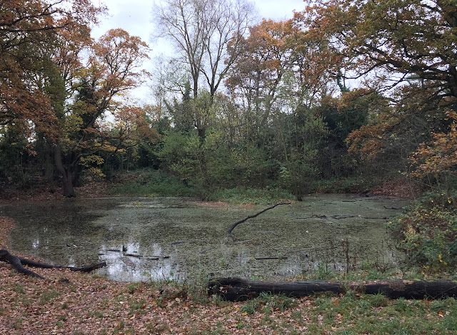 Pond on Hayes Common, 23 November 2016.