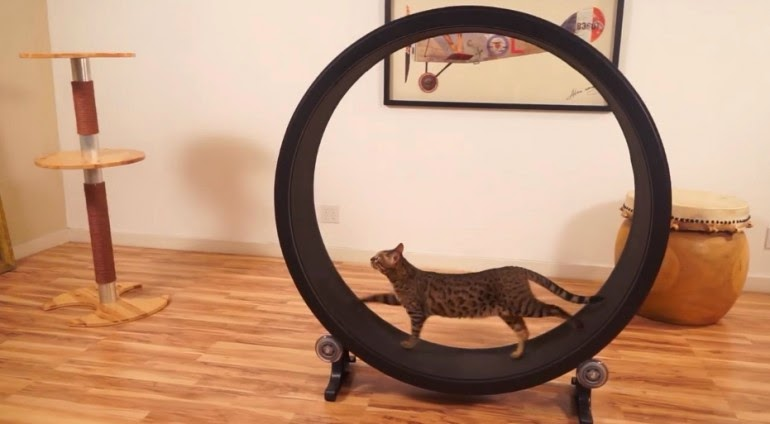 колесо-тренажер для кошек One Fast Cat