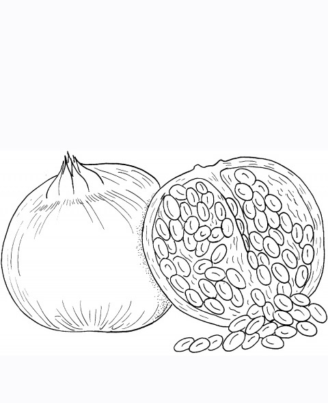 Coloring Pages Of Pumpkin Seeds