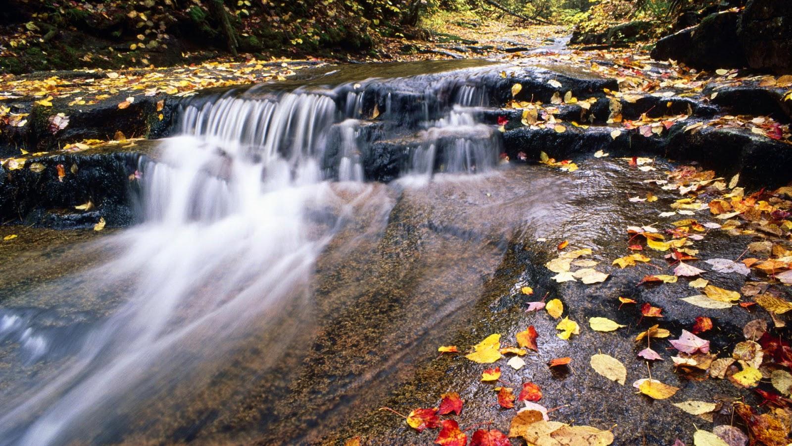 Herfst wallpaper met rivier met gekleurde bladeren