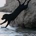 Misteri Jambatan Tempat Anjing Bunuh Diri