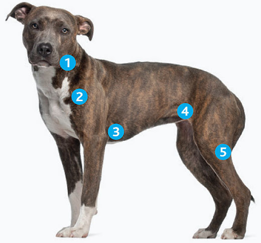 Top Veterinary Articles of the Week: Enlarged Lymph Nodes, Dewclaws, and more ...
