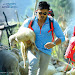 Dhruva movie first look wallpapers-mini-thumb-9