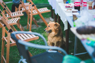 A brown dog sitting by a table in the grass with brown lawn chairs around it