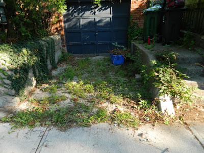 Riverdale Toronto Summer Garden Cleanup Before by Paul Jung Gardening Services--a Toronto Gardening Company