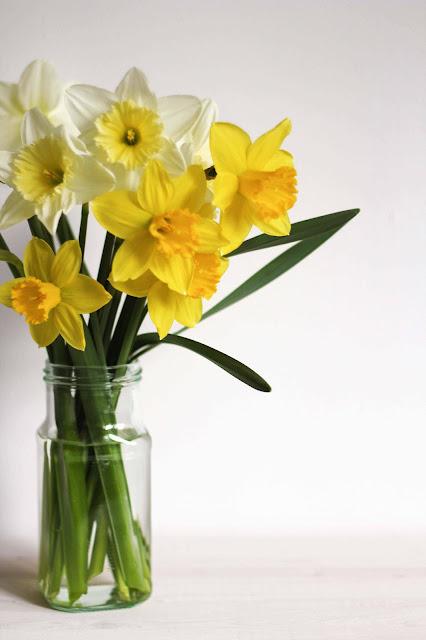 fete-des-meres,jonquilles,fleurs, bonne-fete-des-meres,montreal,anthracite-aime