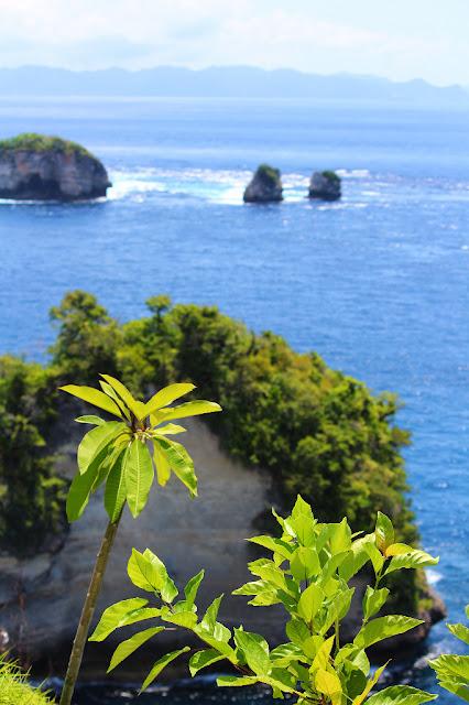 rumah pohoh & pulau seribu nusa penida