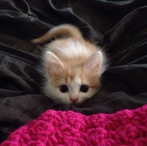 21 foto anak kucing comel yang eh kenapa comel sangat ni