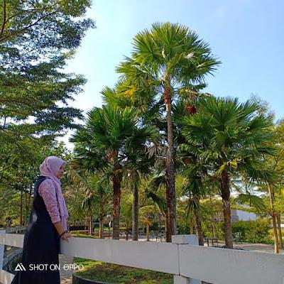 Milkindo : Wisata Edukasi Sapi Perah di Kepanjen yang Instagramable
