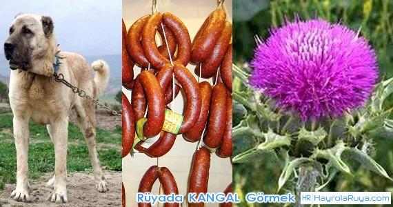 Rüyada Kangalın Görülmesi rüyada kangal köpeği saldırması rüyada yavru kangal köpeği görmek rüyada kangal köpek ısırması rüyada kangal köpeğinin saldırması rüyada kangal köpek kovalaması rüyada kangal otu görmek rüyada kanguru rüyada büyük köpek görmek