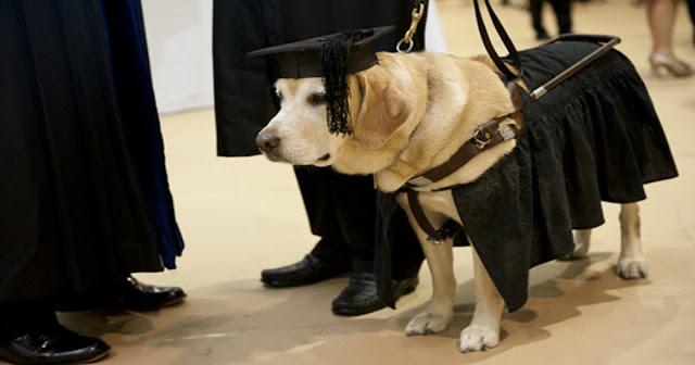 Chú chó Kirsch khoác lên mình trang phục thạc sĩ danh dự.